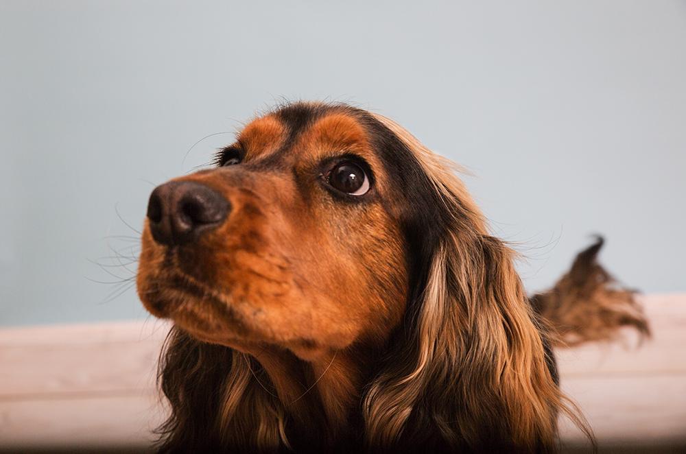 Fotografia zwierząt – pies Erni